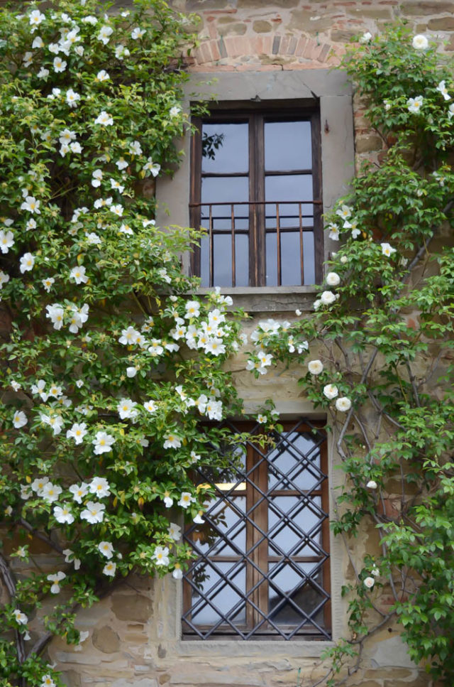 Windows outlined with beautiful greenery. There's beauty in every corner in Volpaia!