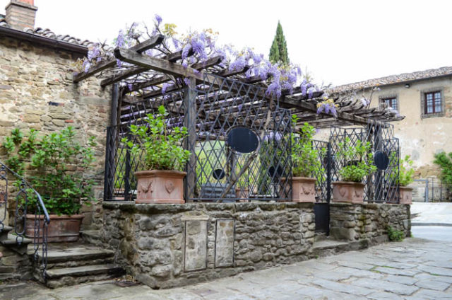 Beautiful springtime wisteria blooming on the streets of Volpaia.
